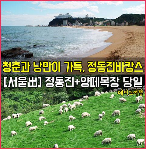 [서울出]정동진바캉스+양떼목장 당일 데이트여행*